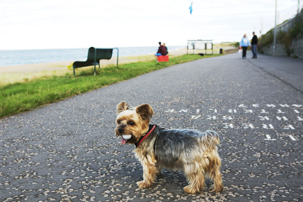 Dog-fun-in-Greystones.jpg