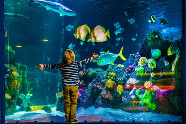 Image result for the National Sea Life Centre